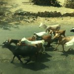 エチオピア・ケニア国境 陸路バスの旅【エチオピア編(西回り)】-イモ子のアフリカ旅ゴー